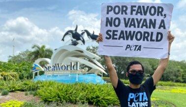 Este Podría Ser el Fin de SeaWorld, A Menos Que Siga Estos Pasos