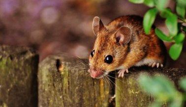 ¡Victoria! Brasil prohíbe uso de animales en crueles experimentos en clase
