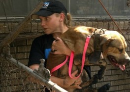 Will Your Animal Companions Be Protected in a Disaster?