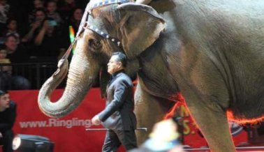 Recordando a Karen, la elefanta que sufrió durante 47 años en Ringling