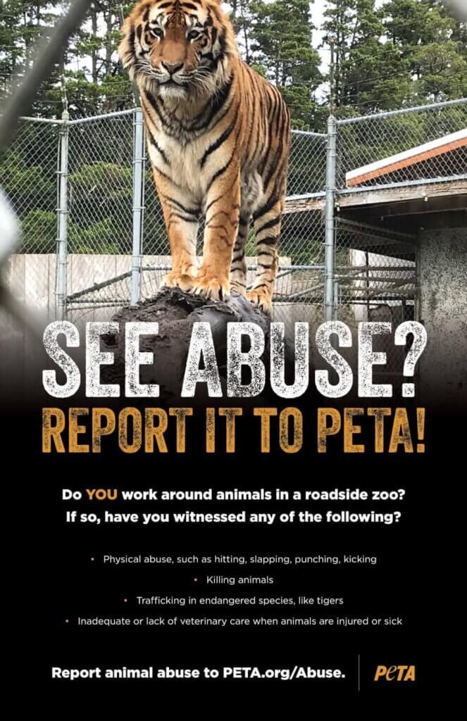 Reportar Maltrato Animal en Zoológicos de Carretera