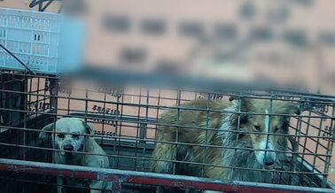 Investigación: Perros Apaleados y Asesinados en la Industria Del Cuero