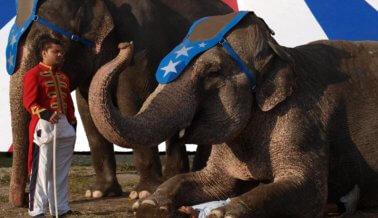 ¡Actúa ahora! Dile a Curacao que cancele los crueles paseos en elefante!