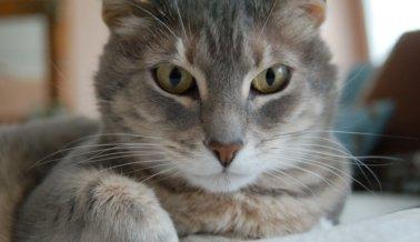 El condado de Miami-Dade  pone fin a la disección de gatos