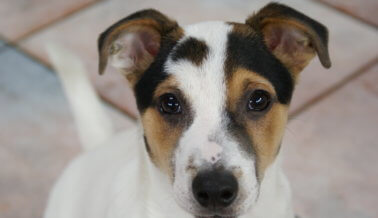 8 Razones para adoptar – no comprar – perros
