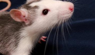 Muerte de niño debería ser el final de la venta de roedores en Petco