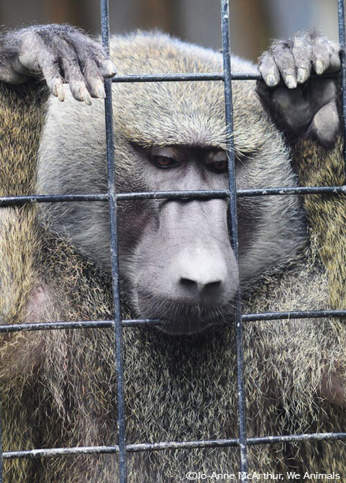 Sad Zoo Animal