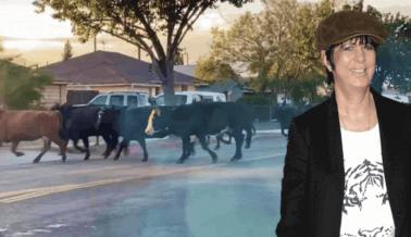 Escape de un Matadero: Diane Warren, Amiga de PETA, Rescata a la Última Vaca que Estaba Extraviada