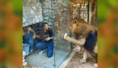 Estos Turistas Aprendieron por las Malas: Nunca Pagues por Interactuar con Grandes Felinos
