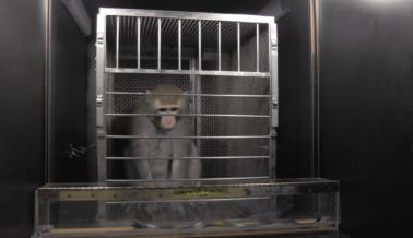 NIH Bloquea Comentarios en sus Redes Sociales que Critican las Crueles Pruebas en Animales: PETA Actúa