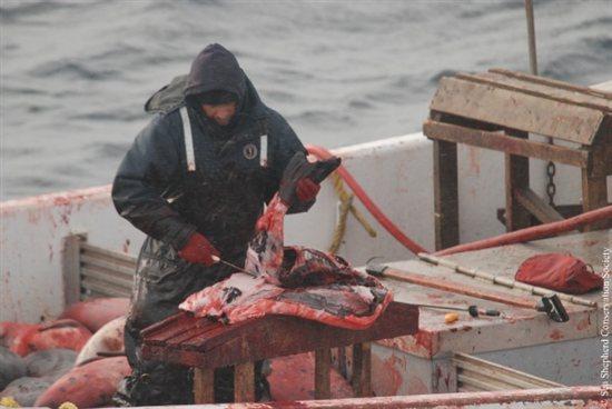 Seal-Slaugher-10