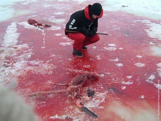 Seal-Slaugher-9