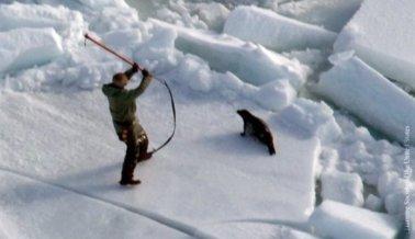 """Atacar, revisar y desangrar: El proceso """"humanitario"""" para matar focas en Canadá"""