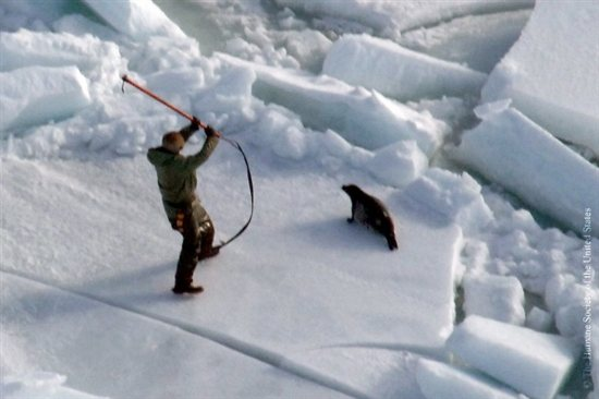 Seal-Slaughter-2
