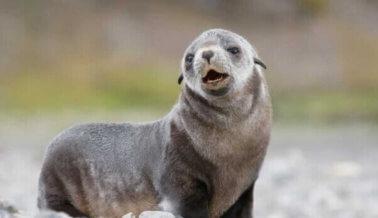 La matanza anual de focas de Canadá comienza hoy. Así es como la terminamos.
