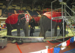 5 Circuses That Need to Follow Ringling and Get Rid of Elephant Acts Now