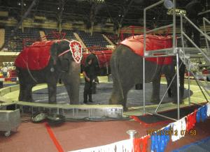 Estos países de América Latina están ayudando a los animales en los circos