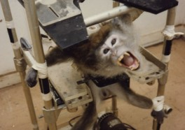 9 Secret Devices That Animal Abusers Don't Want You to Know About
