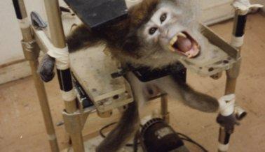 9 artefactos secretos que los abusadores de animales no quieren que conozcas