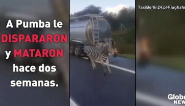 VIDEO: Cebra Usada por un Circo Escapa y es Asesinada a Tiros