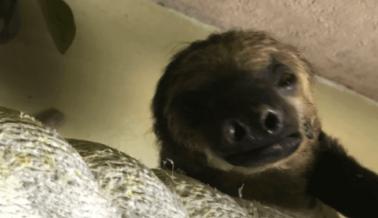 PETA Comparte Desgarradoras Historias de los Sombríos Acuarios SeaQuest