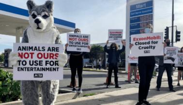 ¡Victoria! ExxonMobil Confirma que Retirará su Patrocinio al Iditarod