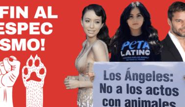 ¡Mira! 17 Citas Inspiradoras de Latinos Contra el Especismo