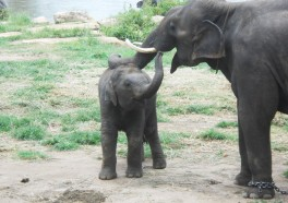 The Heartwarming Story of Sunder the Elephant