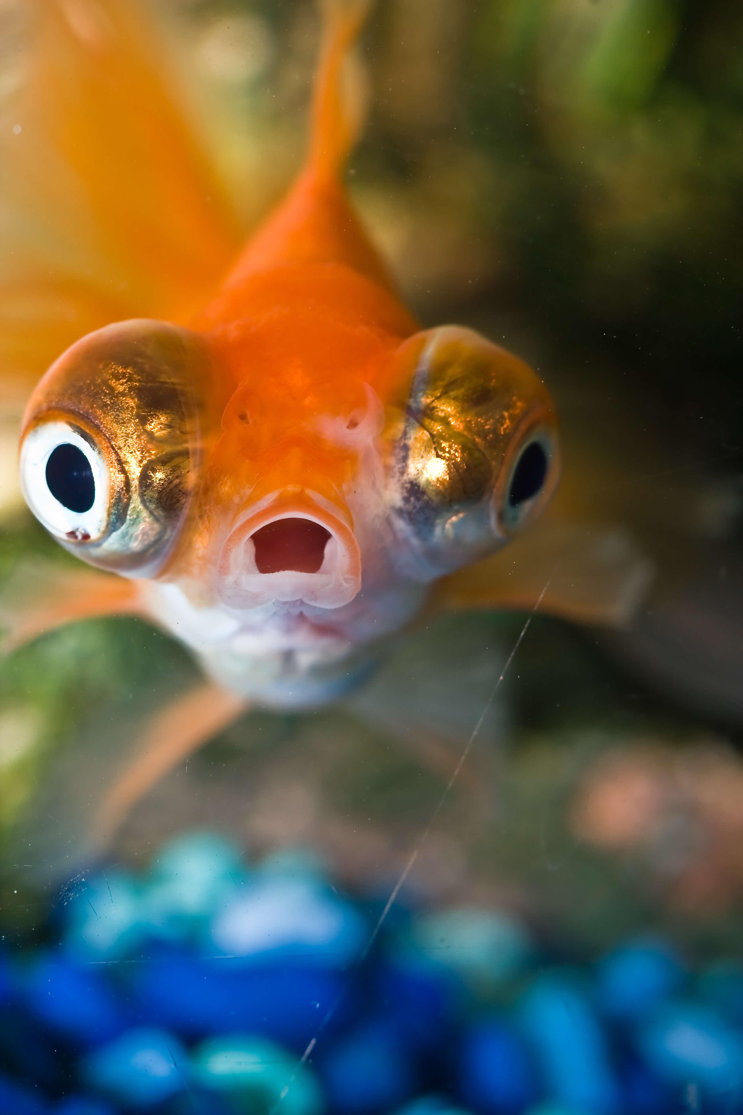 9 razones por las que los peces son \