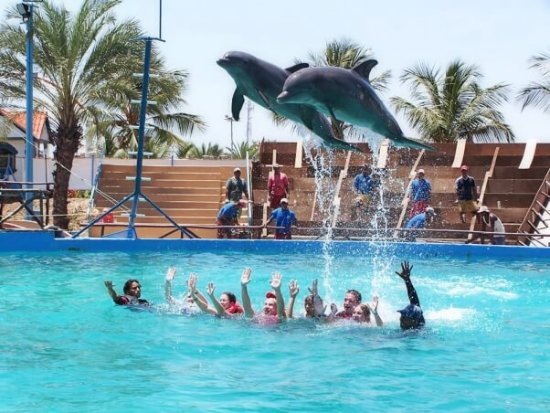 Swim-With-Dolphins-Trick