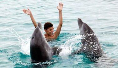 Si Amas a los Delfines, Nunca Pagues Para Nadar con Ellos