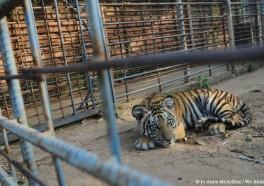 13 veces que los zoológicos han sido malos para los animales
