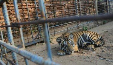 Estudio revela que normalmente los zoológicos NO son educativos para los niños