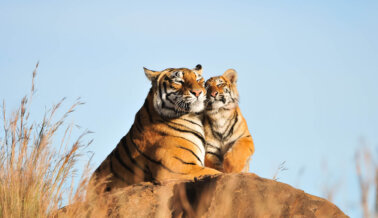 ¡Progreso! Circos con Animales Silvestres Prohibidos en Madrid