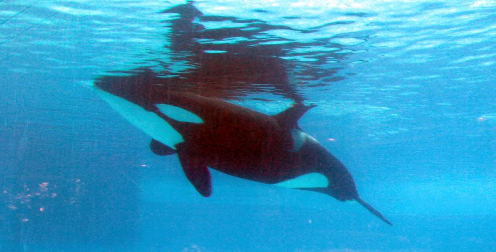 Trua-orca2