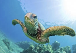 Video: Esta tortuga herida te hará pensar muy bien en el plástico