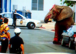 Tyke the Elephant's Last Day on Earth (VIDEO)