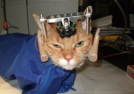 Victory! UW-Madison Closes Cruel Cat Lab
