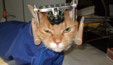 ¡Los Animales no son Nuestros Para Experimentar en Ellos!
