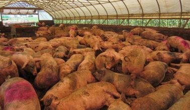 Proveedor de 'Carne Feliz' de Whole Foods al Descubierto