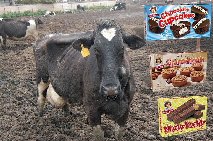 La leche usada en las golosinas de Little Debbie, proviene de vacas que sufren en la despiadada industria de los lácteos.