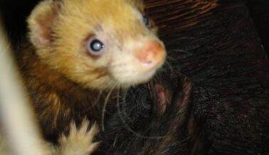 Exclusiva de PETA: Exponemos a las Compañías que Venden Animales a Laboratorios