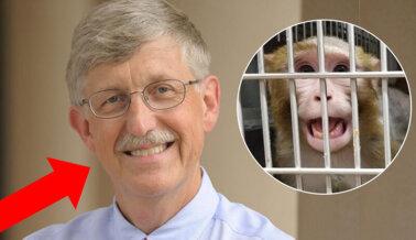 Director de los NIH Pasa por Alto la Crueldad, Exige un Nuevo Liderazgo Ya