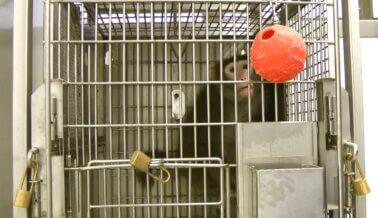 UMass Pone Fin a Conversaciones con PETA Sobre Bienestar Animal en Laboratorios