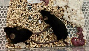 Video Encubierto de PETA: Cráneos Abiertos y Otros Horrores
