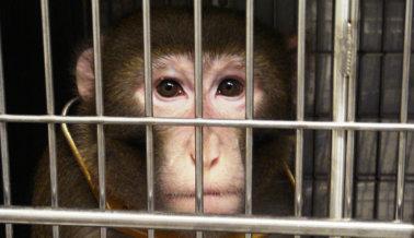 Dile al Congreso: Financien Métodos de Investigación Modernos en Lugar de Experimentos Crueles en Animales