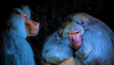 Centro Nacional de Investigación de Primates Southwest del Instituto de Investigación Biomédica de Texas