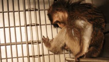 Los Animales Mueren Mientras los Experimentadores de la Universidad de Washington Salen a Almorzar