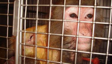 Pídele a la FDA Que Ponga Fin a Las Dolorosas Pruebas en Animales