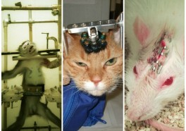 6 Pointless Animal Experiments Happening NOW